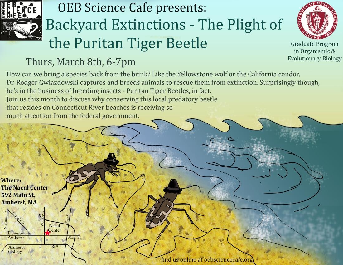 tiger beetle draft 2.jpg